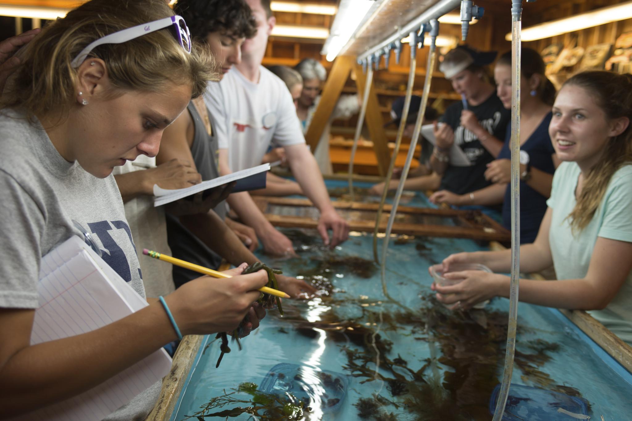 UNH student examining fish